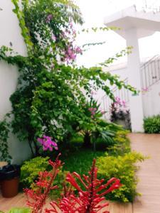 A garden outside Hotel Loisirs Mandji