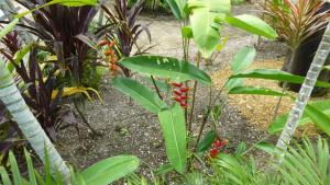 A view of the pool at Kekemba Resort Apartments Paramaribo or nearby