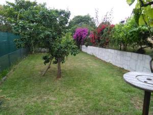 A garden outside Casa Ria Leda