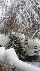 Colibrí House durante el invierno
