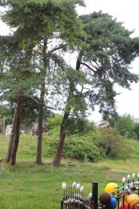 Сад в Мариэла на Балтийской косе - 200 м до моря