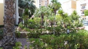 A garden outside Casa de Feliz