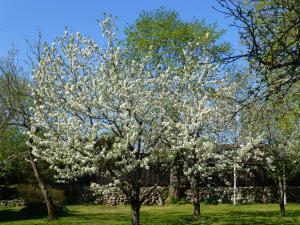 Jardín al aire libre en Jurna Recreation Farm