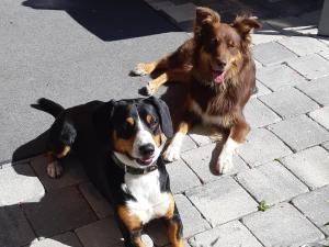 Haustiere von Gästen der Unterkunft Appartement Haus Petra