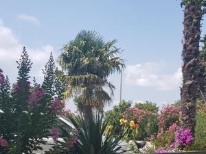 A garden outside Apartments Ana Sukosan