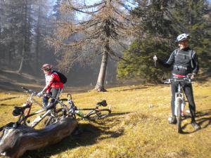 Radfahren an der Unterkunft Ferienwohnungen Forellenhof Waldner oder in der Nähe