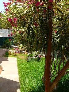 A garden outside Apartamentos Osa Menor