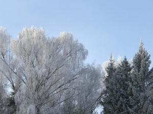 Forest Club Lyutoretskoye зимой