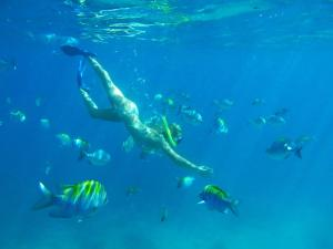 Snorkeling and/or diving at the villa or nearby