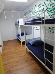 A bunk bed or bunk beds in a room at Dream Traveller Guest House