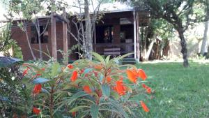 Giardino di Solar Vovó Emma House