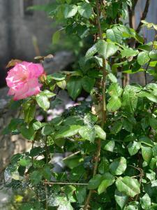 Zahrada ubytování House Marta