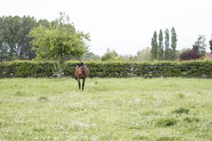 Équitation au sein de la villa ou à proximité