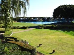 A garden outside Waterfront Resort Villa with Buggy
