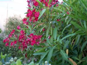 A garden outside Sea Breeze Hotel Apartments & Residences Chios