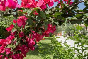 Κήπος έξω από το Linea