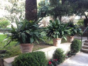 A garden outside Giardini di Monteverde