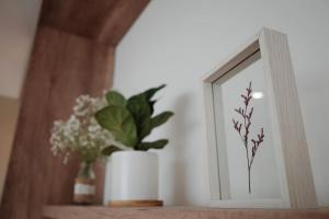 TUNA Homestay - furnished studio in city centre