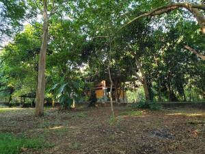 A garden outside Jungle House