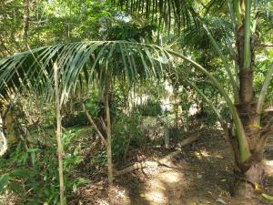 Ein Garten an der Unterkunft Jungle House