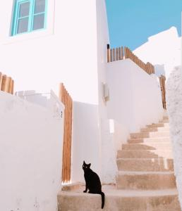 Pet or pets staying with guests at Azenhas do Mar West Coast Design and Surf Villas