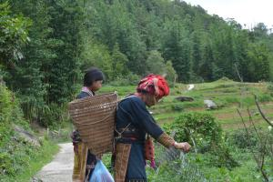 Sapa Homestay Trekking Tour For Backpackers