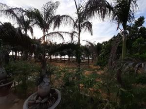 Homestay Vườn Dừa Thảo Nguyên