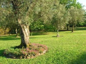 A garden outside Casa de Chandezil
