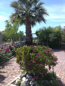 Κήπος έξω από το The Green Home