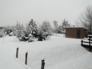 Verde y Nieve durante el invierno