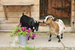 Pet or pets staying with guests at Ferienwohnungen an der Sägemühle