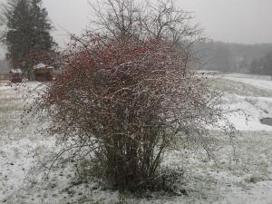 Pumpuri during the winter