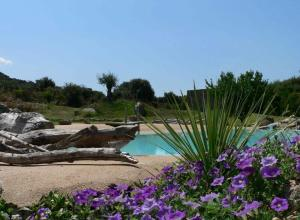 A view of the pool at L'Alivi di l'Osari or nearby