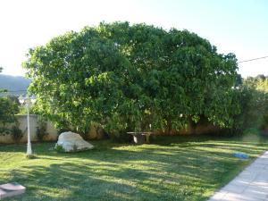 Jardin de l'établissement Roquevaire