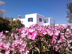 A garden outside Nicos Studios & Apartments