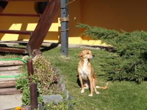 Pet or pets staying with guests at Cabañas Marias del Sur