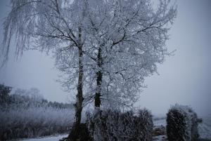 Vledderstee during the winter