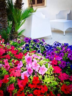 Araba Fenice Hotel - San Vito Lo Capo - Foto 6