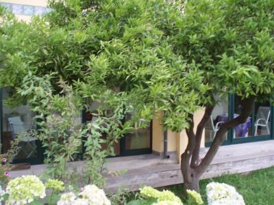 B&B Villa Hortensia - San Giovanni La Punta - Foto 29