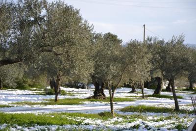 Terre di Senia - Chiaramonte Gulfi - Foto 34