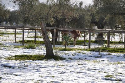 Terre di Senia - Chiaramonte Gulfi - Foto 29