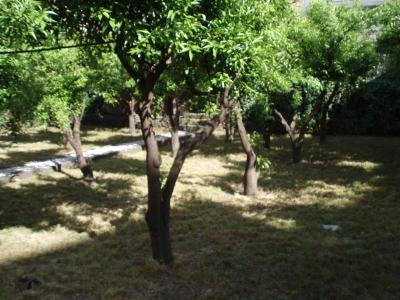 B&B Villa Hortensia - San Giovanni La Punta - Foto 31