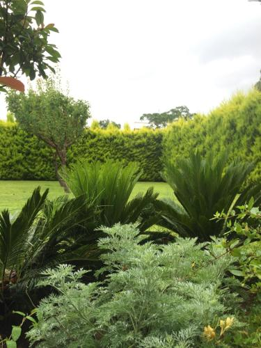 A garden outside Karistos Mare Apartments