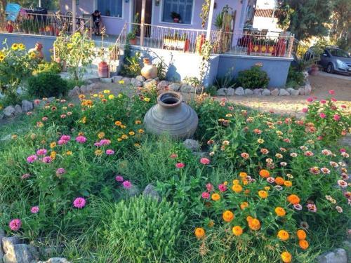 A garden outside AegeanHeaven