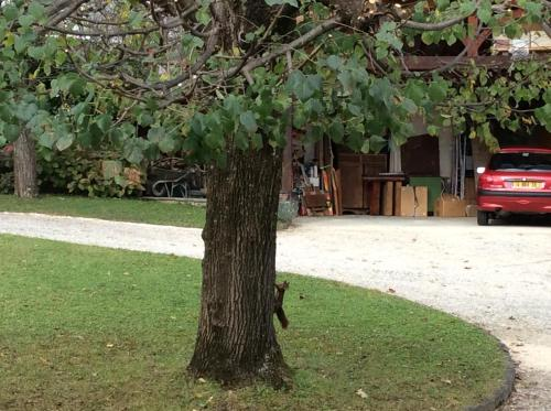 Jardin de l'établissement Studio Montfleury