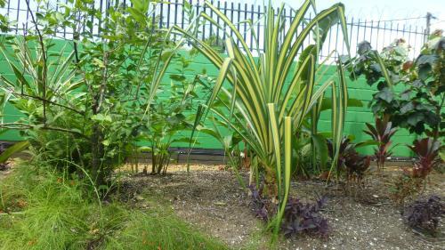 A garden outside Kekemba Resort Apartments Paramaribo