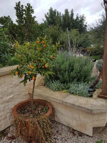 Um jardim no exterior de Apartments Villa Olea