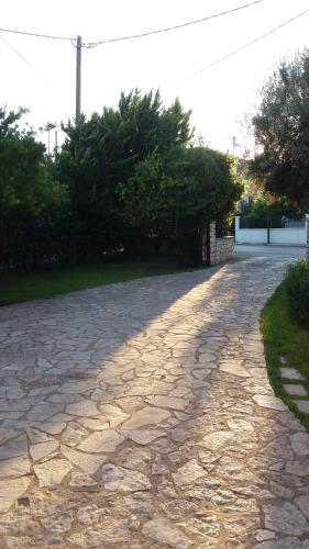 A garden outside ligustro