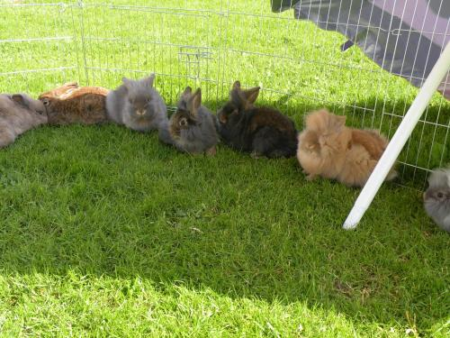 Haustiere von Gästen der Unterkunft Thalhof