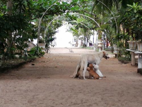 Animal ou animaux domestique(s) séjournant avec des clients dans l'établissement Golden Bay